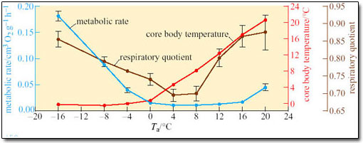 cricket respiration and temperature